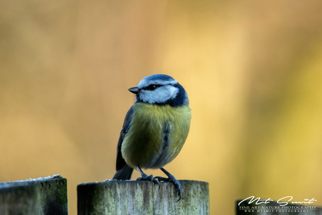 The birds in my garden