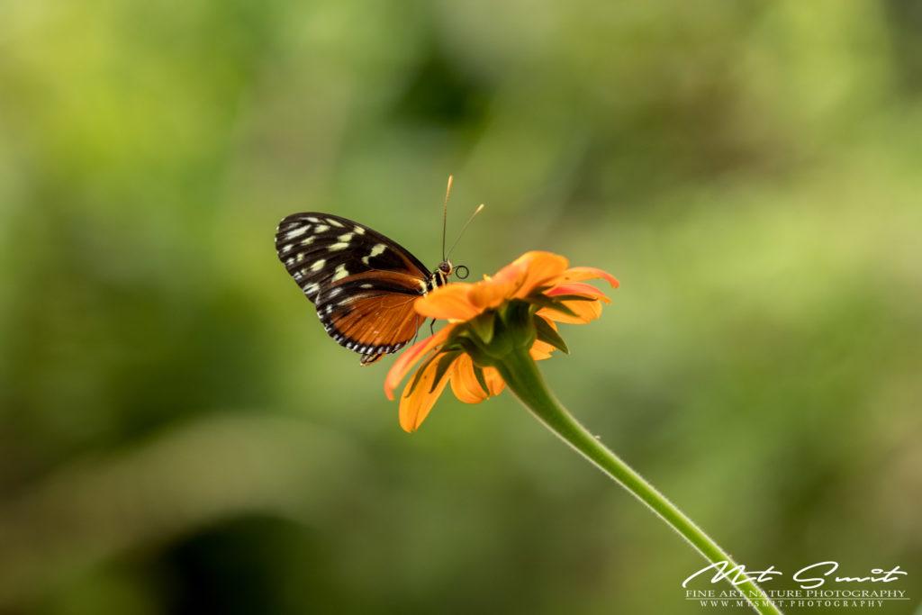 Passiflorahoeve – Butterfly garden