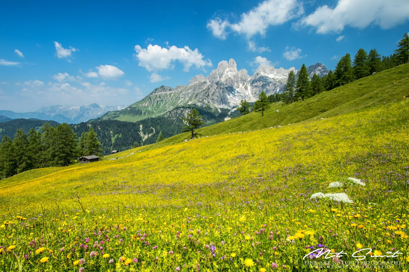 ALPINE_MEADOW