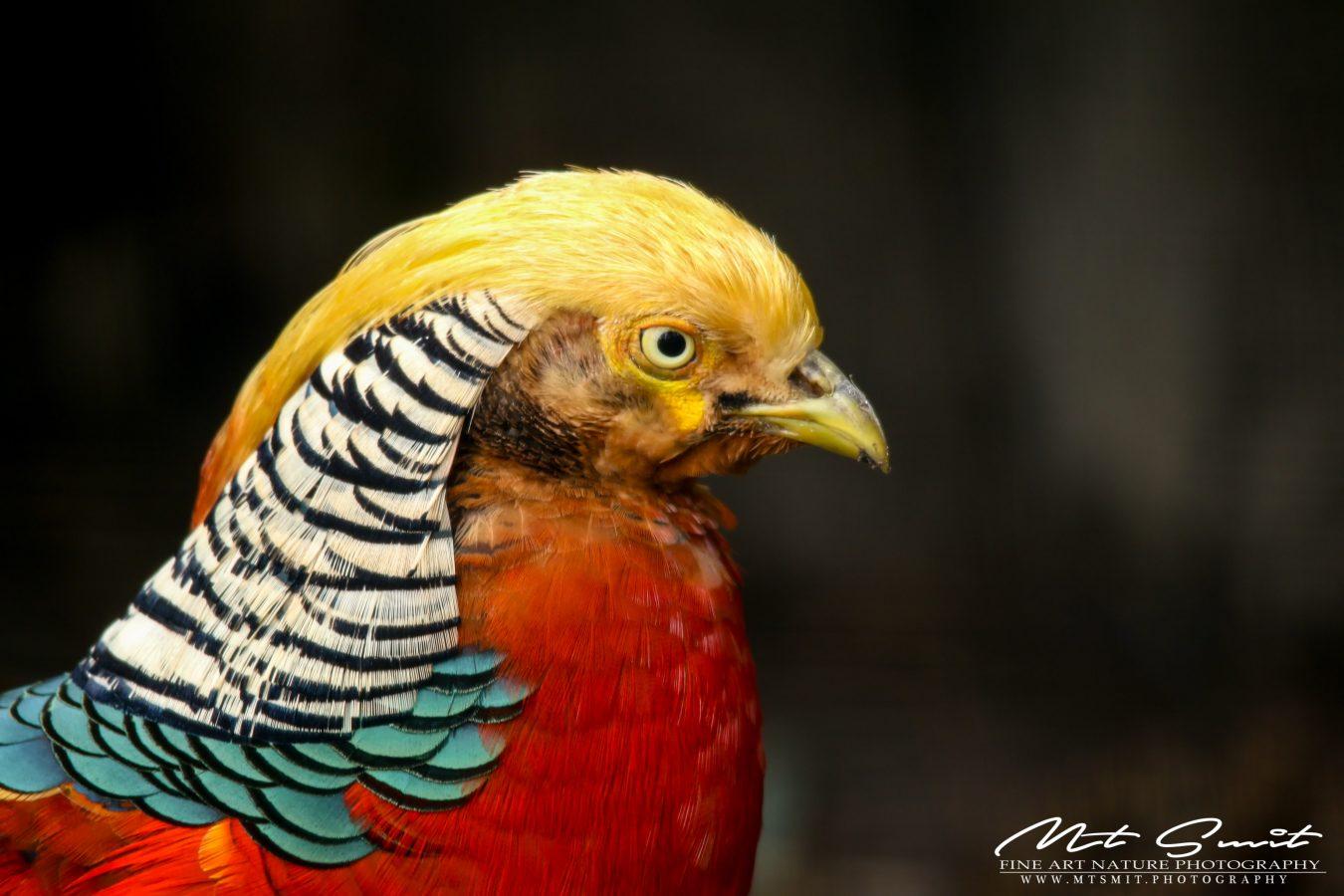 DONALD TRUMP BIRD