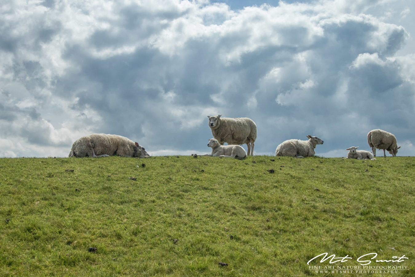 SHEEPS & CLOUDS